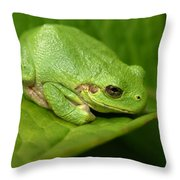 The Little Frog Throw Pillow