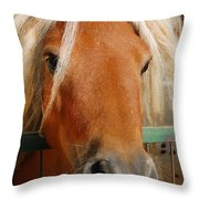 The Little Pony Throw Pillow