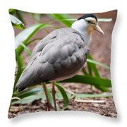 The Masked Lapwing Vanellus Miles Previously Known As The Mask Throw Pillow
