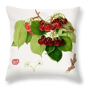 The May Duke Cherry Throw Pillow by William Hooker