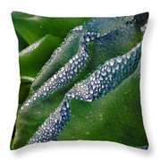 The Midnight Rose Throw Pillow