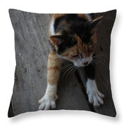 The Morning Stretch  Throw Pillow