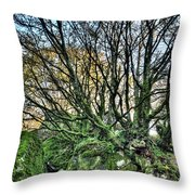 The Mossy Creatures Of The  Old Beech Forest 8 Throw Pillow