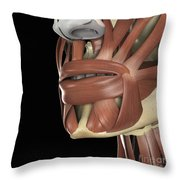 The Muscles Of The Mouth Throw Pillow