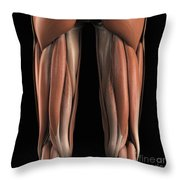 The Muscles Of The Upper Legs Rear Throw Pillow