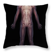 The Musculoskeletal System Rear Throw Pillow