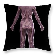 The Nervous And Skeletal Systems Female Throw Pillow