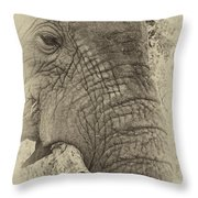 The Old Elephant Bull Throw Pillow