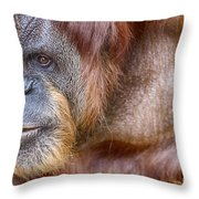The Orangutan Album  Throw Pillow