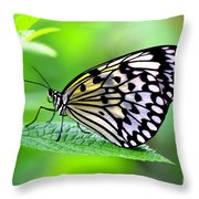 The Paper Kite Or Rice Paper Or Large Tree Nymph Butterfly Also Known As Idea Leuconoe 2 Throw Pillow