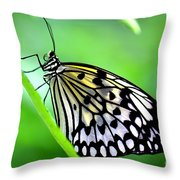 The Paper Kite Or Rice Paper Or Large Tree Nymph Butterfly Also Known As Idea Leuconoe Throw Pillow