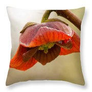 The Paw Paw Bloom Throw Pillow