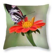The Piano Key Butterfly Throw Pillow
