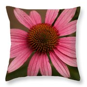The Pink Daisy Throw Pillow