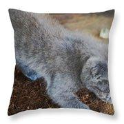 The Playful Kitten Throw Pillow