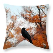 Crow Found The Perfect Pyramid Point Throw Pillow