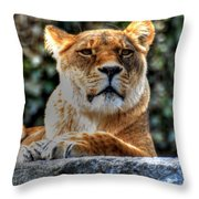 The Pondering Lioness Throw Pillow