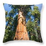 The President - Very Large And Old Sequoia Tree At Sequoia National Park. Throw Pillow