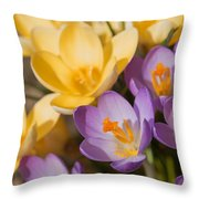 The Purple And Yellow Crocus Flowers Throw Pillow