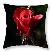 The Red Rode Bud Throw Pillow by Robert Bales