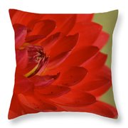 The Red Sun Dahlia Throw Pillow
