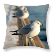 The Ring-billed Gull Throw Pillow
