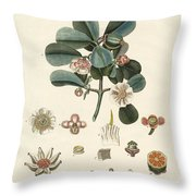 The Rose Coloured Clusia Throw Pillow
