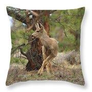 The Rudolph Dance Throw Pillow