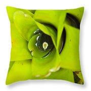 The Secret World In A Bromeliad Throw Pillow by Karon Melillo DeVega