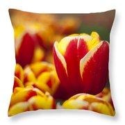 The Single Big Tulip Throw Pillow