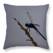 The Slaty Skimmer Throw Pillow