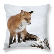 The Sly One Throw Pillow