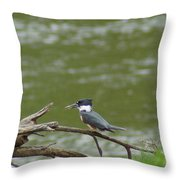 The Southern Kingfisher Side View Throw Pillow