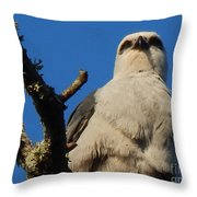 New Orleans  Southern Osprey Throw Pillow