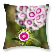 The Star - Beautiful Spring Dianthus Flowers In Bloom. Throw Pillow