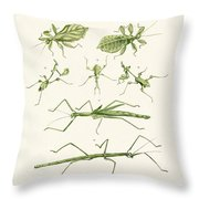 The Stick Insect Throw Pillow