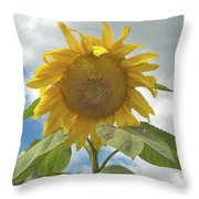 The Sun Is Out Throw Pillow