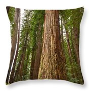 The Survivor - Massive Redwoods Sequoia Sempervirens In Redwoods National Park Named Stout Tree. Throw Pillow by Jamie Pham