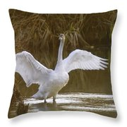 The Swan Spreads Its Wimgs Throw Pillow