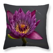 The Tiny Dragonfly On A Water Lily Throw Pillow