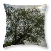 The Tree With His Feet In Water Throw Pillow