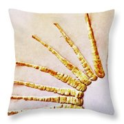 The Undressed Parsnip Throw Pillow