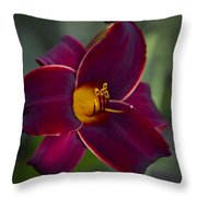 The Unsurpassable Daylily Throw Pillow
