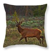 The Velveteen Elk Throw Pillow
