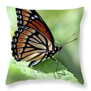 The Viceroy Throw Pillow