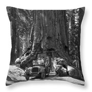 The Wawona Giant Sequoia Tree Throw Pillow