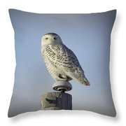The Wise Snowy Owl Throw Pillow