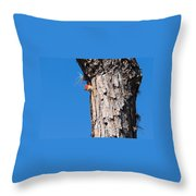 The Woodpecker Is In Throw Pillow