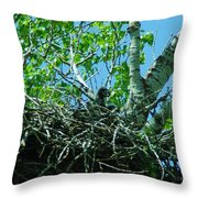 The Young Eaglet Peaks Out  Throw Pillow