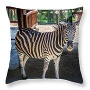 The Zebra Throw Pillow
